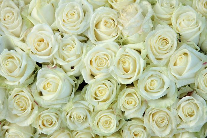 Vinylová Tapeta Skupina bílých růží, svatební dekorace - Témata