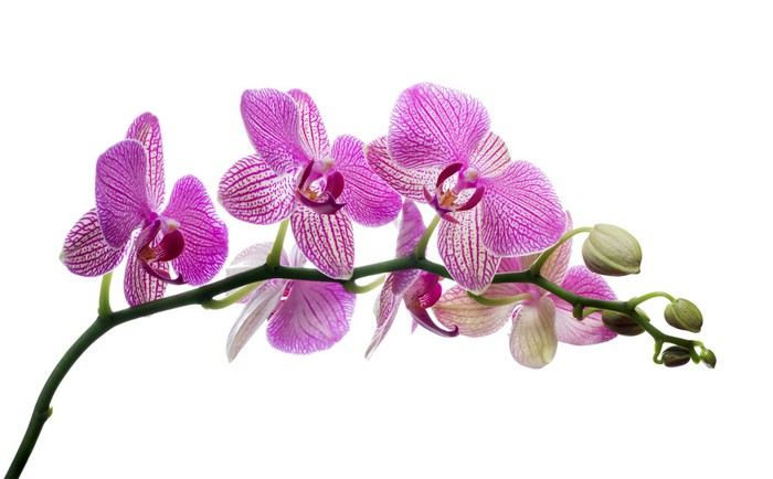 Pink Orchids Flowers Beautiful  3D Wall Sticker Poster Decal Mural Bedroom Z278