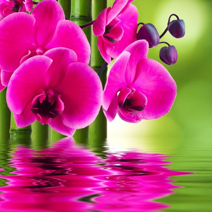 Carta da parati fiore di orchidea con bamb e riflessione for Orchidea acqua