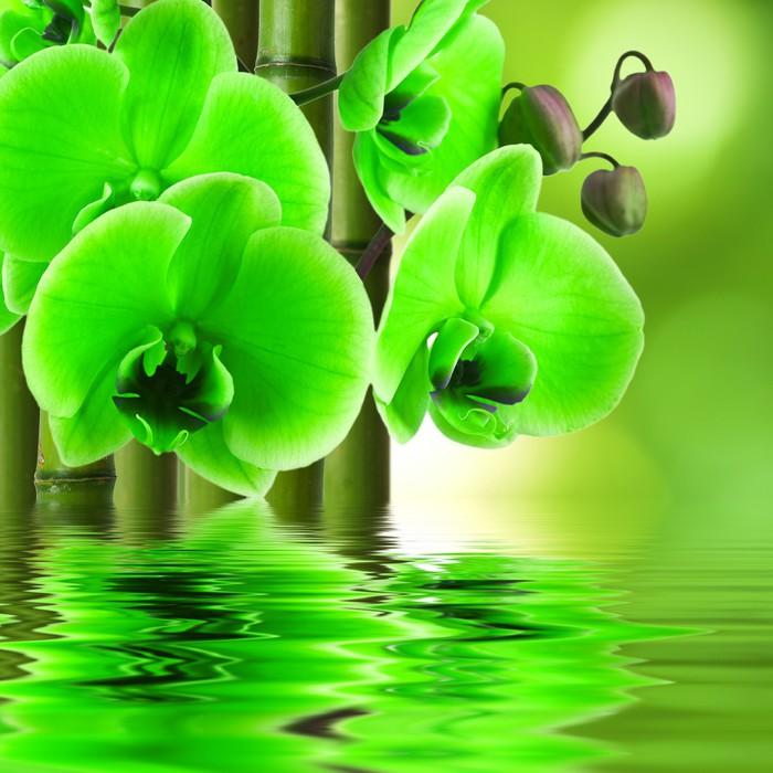 Vinylová Tapeta Orchidej květina s bambusem a odraz ve vodě - Styly