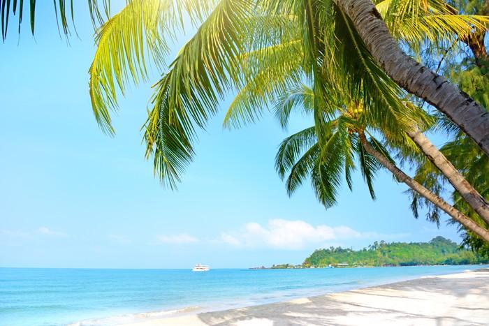fototapete strand mit palmen klong prao beach pixers wir leben um zu ver ndern. Black Bedroom Furniture Sets. Home Design Ideas