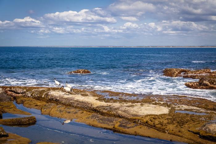 Vinylová Tapeta Sunshine Coast Queensland pobřeží - Oceánie