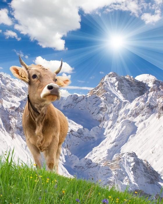 Cuadro en lienzo dos vacas pixers vivimos para cambiar - Cuadros de vacas ...