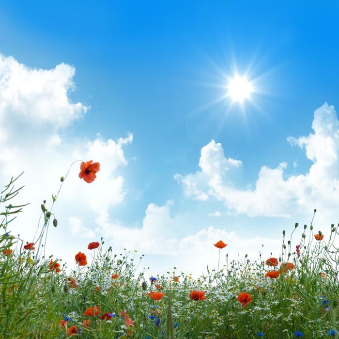 Carta da Parati Prato di fiori sotto il cielo blu • Pixers ...