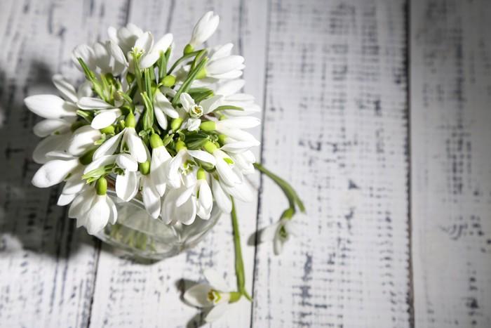 Vinylová Tapeta Kytice krásných sněženky na dřevěném pozadí - Květiny