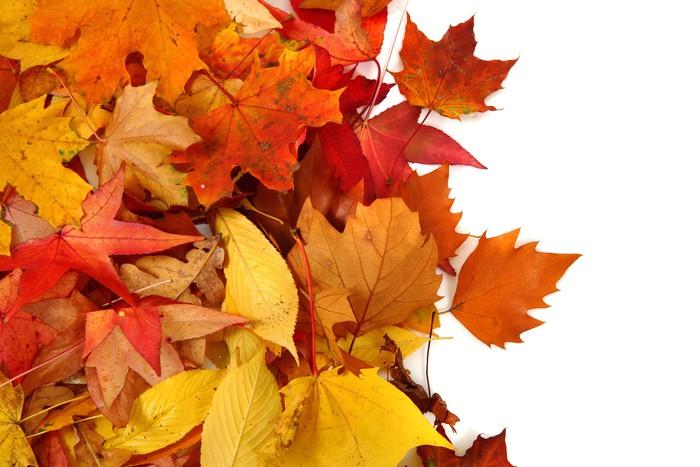 Vinylová Tapeta Podzimní listy na pozadí - Stromy