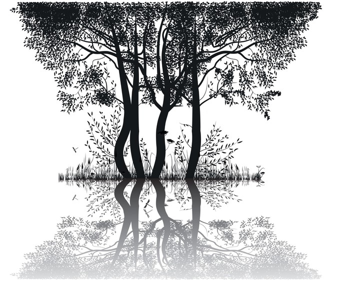 Vinylová Tapeta Siluety stromů u jezera - Stromy