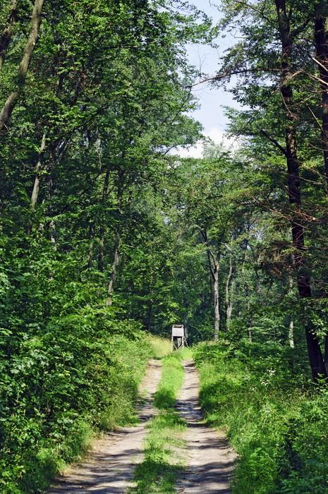 Vinylová Tapeta Lov stojan v lese - Venkov
