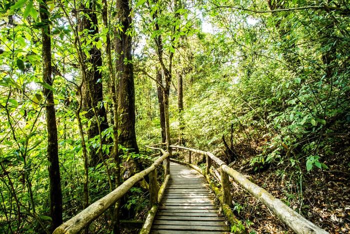 Vinylová Tapeta Cesta v lese, doi Inthanon národního parku, Chiangmai Thajsko - Příroda a divočina