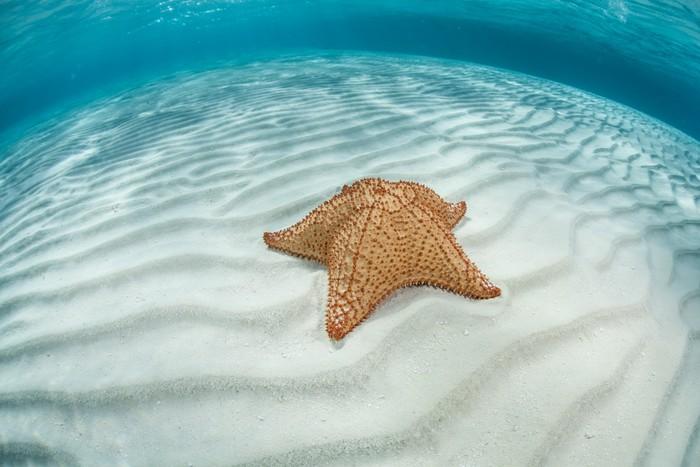 Vinylová Tapeta Caribbean Hvězdice - Vodní a mořský život