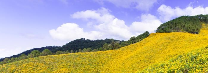 Vinylová Tapeta Pole žlutých květin. - Nebe