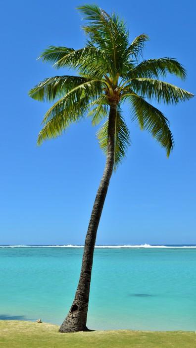 papier peint palmier tropical pixers nous vivons pour changer. Black Bedroom Furniture Sets. Home Design Ideas