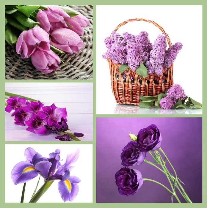 Collage of different purple flowers Wall Mural Pixers We live