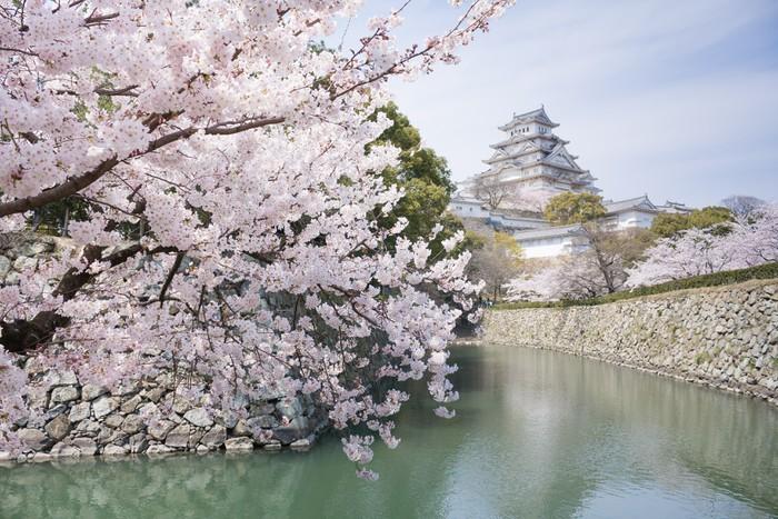 Carta Da Parati Fiori Di Ciliegio : Carta da parati fiori di ciliegio giapponese e il castello in