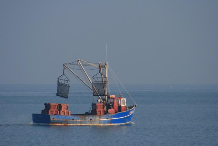 Vinylová Tapeta Bateau de pêche, coquille Saint-Jacques - Outdoorové sporty