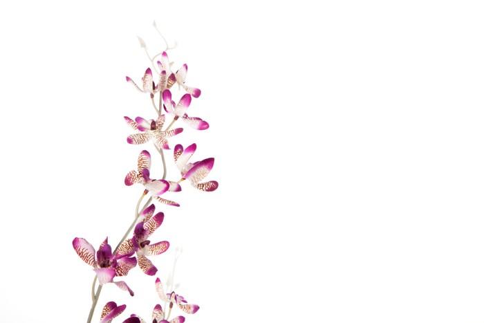 Vinylová Tapeta Krásné květiny - Květiny