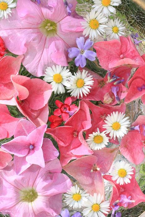 Vinylová fototapeta Krásná, květinová růžová, pozadí - Vinylová fototapeta