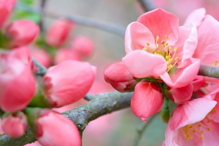 Carta Da Parati Fiori Rosa : Carta da parati fiori di primavera con fiore rosa u2022 pixers