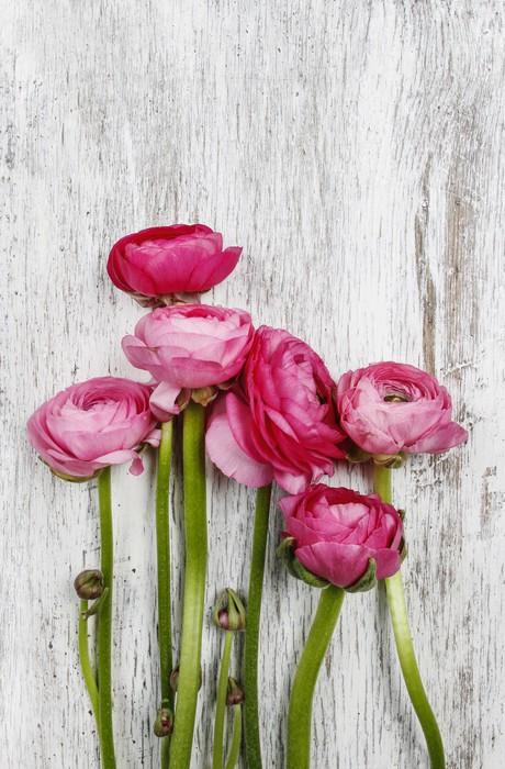 Vinylová Tapeta Růžové perské pryskyřník květy (Ranunculus) na dřevěné pozadí - Slavnosti