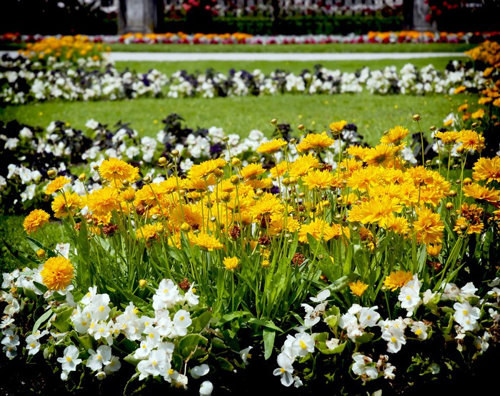 Vinylová Tapeta Postel s květinami - Květiny