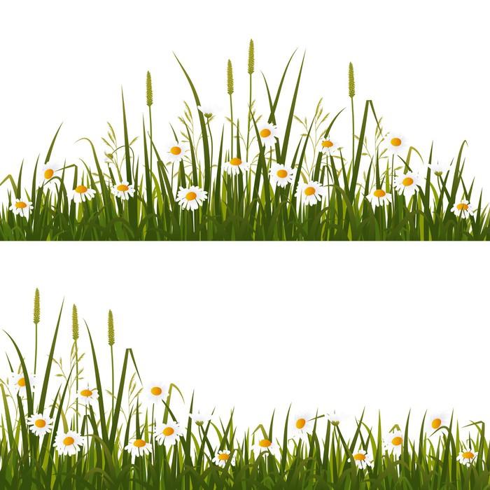 Vinylová Tapeta Divoká květina louka, izolovaných na bílém pozadí - Venkov
