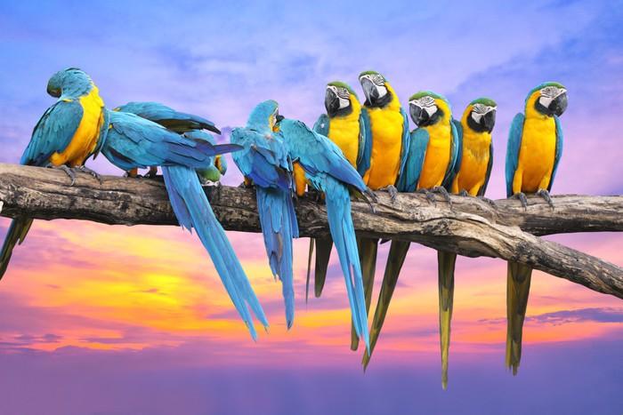 Vinylová Tapeta Modrá a žlutá papoušek s krásnou oblohu při západu slunce - Témata