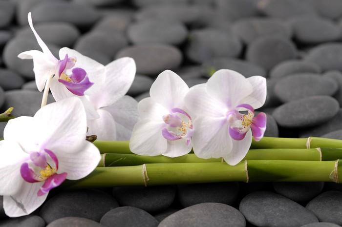 Nálepka Pixerstick Bílá orchidej s tenkým bambusovém háji na oblázky - Životní styl, péče o tělo a krása