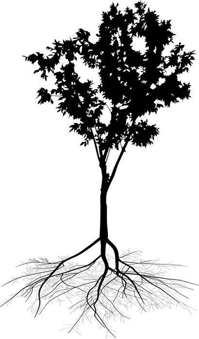 Papier peint petit arbre feuilles caduques avec la racine sur fond blanc pixers nous - Arbre sans racine envahissante ...