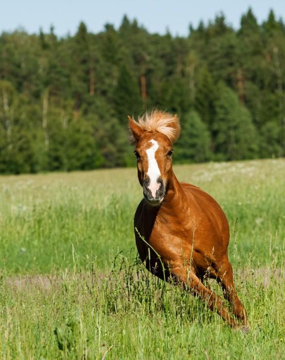 Nálepka Pixerstick Pony běží - Savci