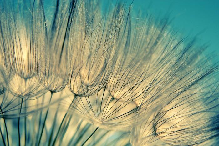 Fototapete blau abstrakte l wenzahn flower hintergrund - Fototapete blau ...