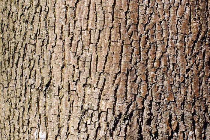 Vinylová Tapeta Brown stromové kůry textury v orientaci na šířku - Abstraktní