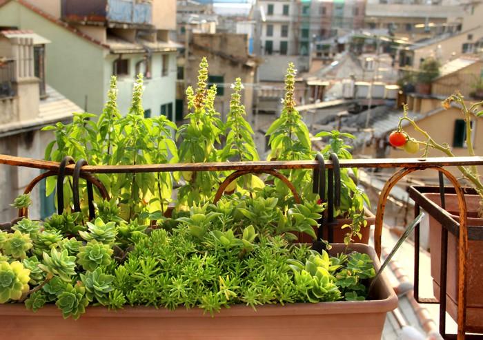 fototapete sch ne mediterrane terrasse mit blumen pixers wir leben um zu ver ndern. Black Bedroom Furniture Sets. Home Design Ideas