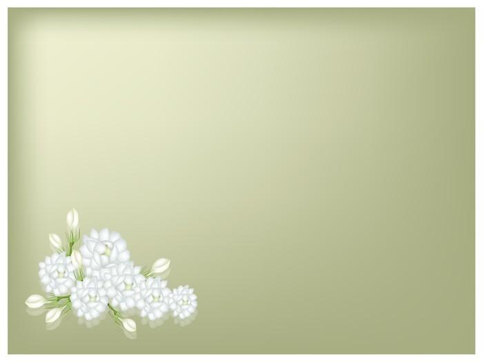 Vinylová Tapeta Ilustrace jasmínových květů na zeleném pozadí - Květiny