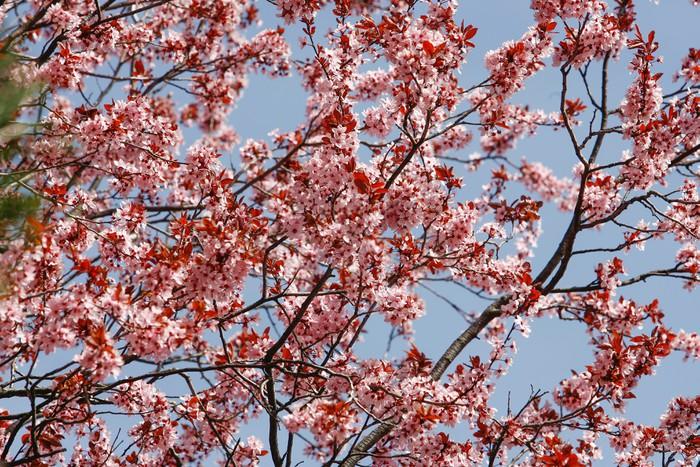 Vinylová Tapeta Kvetoucí květiny na stromě na jaře - Květiny