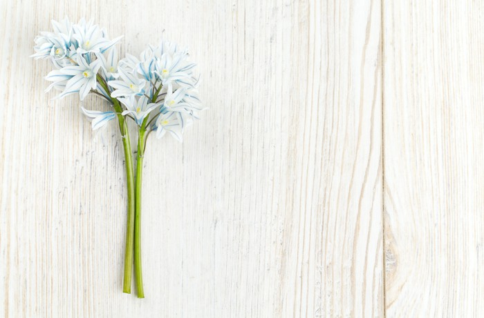 Vinylová Tapeta Krásné jarní květiny na dřevěné desce - Květiny