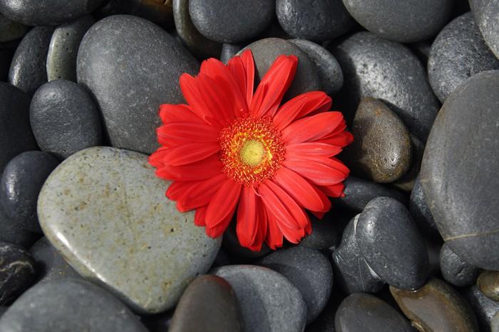 Vinylová Tapeta Červený květ gerbery na mokré oblázky - Životní styl, péče o tělo a krása