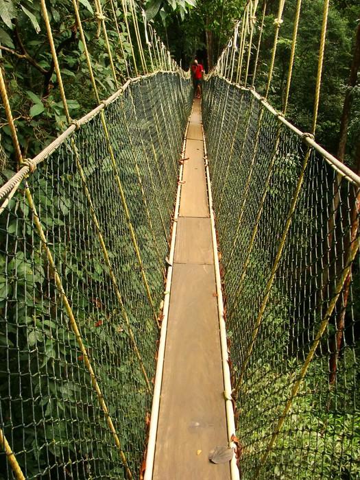 Canopy walkway Taman Negara National Park Malaysia Vinyl Wall Mural - Asia & Canopy walkway Taman Negara National Park Malaysia Wall Mural ...