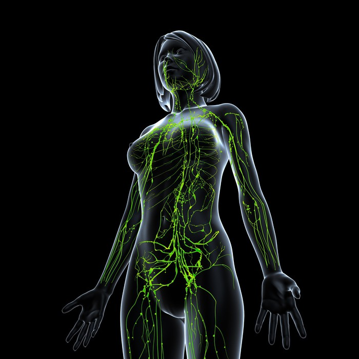 Fototapete Anatomie der weiblichen Lymphsystem in schwarz • Pixers ...