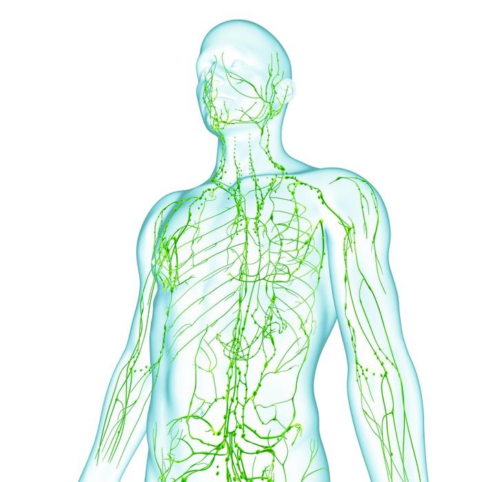 Vinilo Pixerstick Anatomía del sistema linfático macho • Pixers ...
