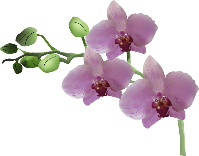 Pink orchid with three flowers and green buds on white pixerstick sticker wall decals