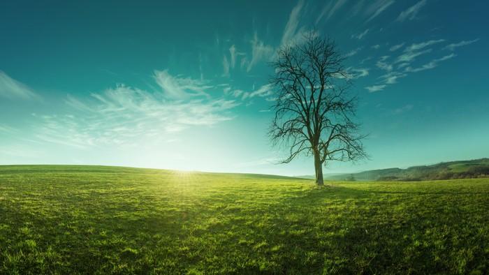 Vinylová Tapeta Osamělý strom na louce za úsvitu, idylický, pohádkové krajiny - Roční období