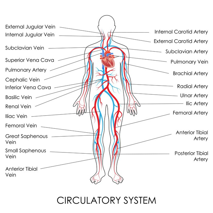 Aufkleber Blutkreislauf • Pixers® - Wir leben, um zu verändern