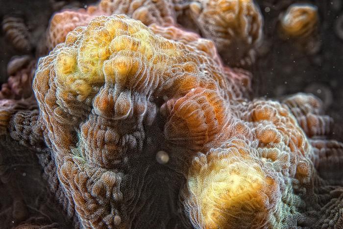Vinylová Tapeta Hard korálů makro detail při potápění v Indonésii - Vodní a mořský život