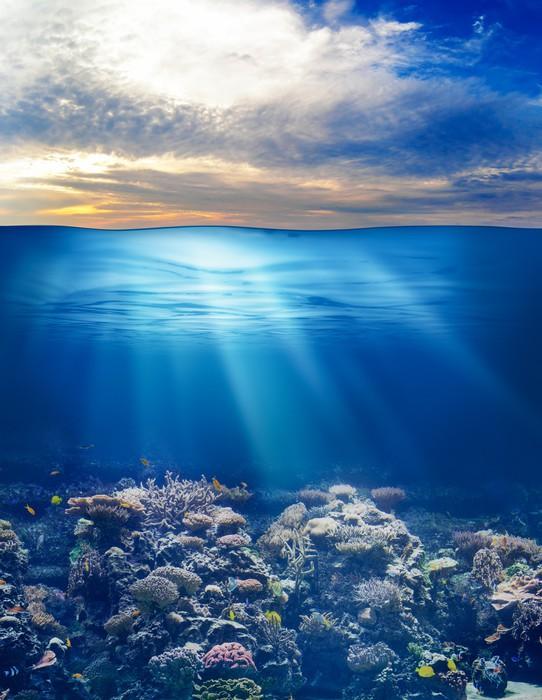 fototapete meer oder ozean unterwasserwelt mit sonnenuntergang himmel pixers wir leben um. Black Bedroom Furniture Sets. Home Design Ideas