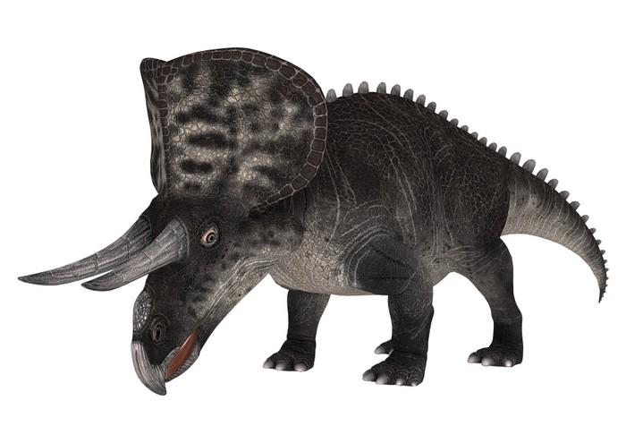 Vinylová fototapeta Dinosaur Zuniceratops - Vinylová fototapeta