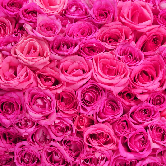 Roses pink flowers background wall mural pixers we live to change roses pink flowers background vinyl wall mural flowers mightylinksfo
