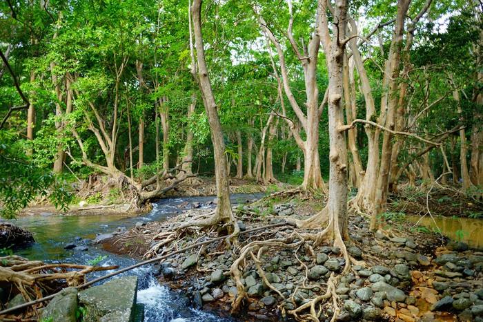 Vinylová Tapeta Tropické džungle ostrova Mauritius - Afrika