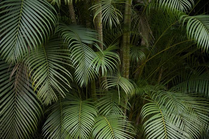 papier peint sombre jungle tropicale de fronde de paume de fond pixers nous vivons pour changer. Black Bedroom Furniture Sets. Home Design Ideas