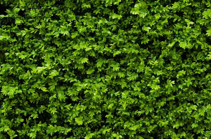Vinylová Tapeta Tiny zelené listy na pozadí - Struktury