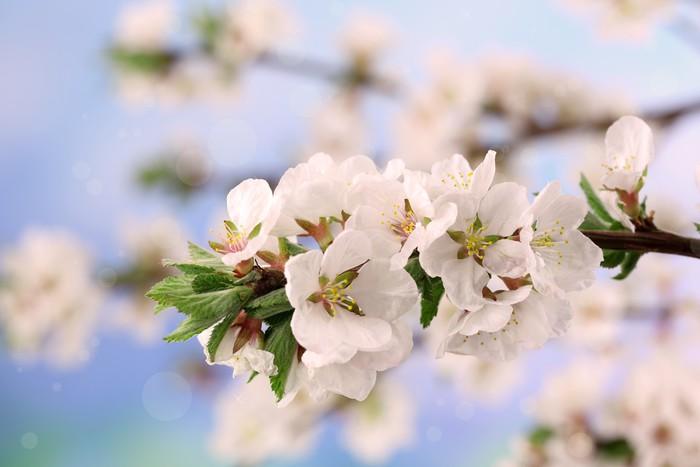 Vinylová Tapeta Krásné kvetoucí větve, detailní, na světlém pozadí - Květiny